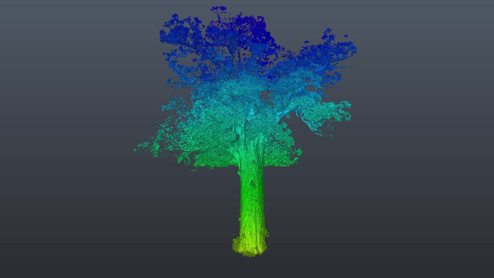 Point cloud of Tane Mauta, The coloration of the image artistically shows the elevation of the scan