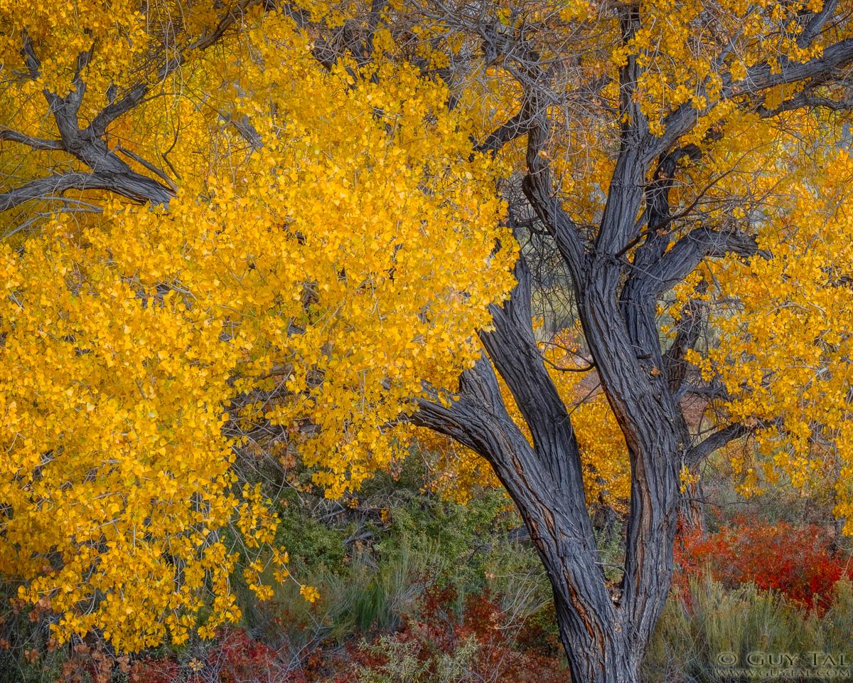 Abundant Autumn