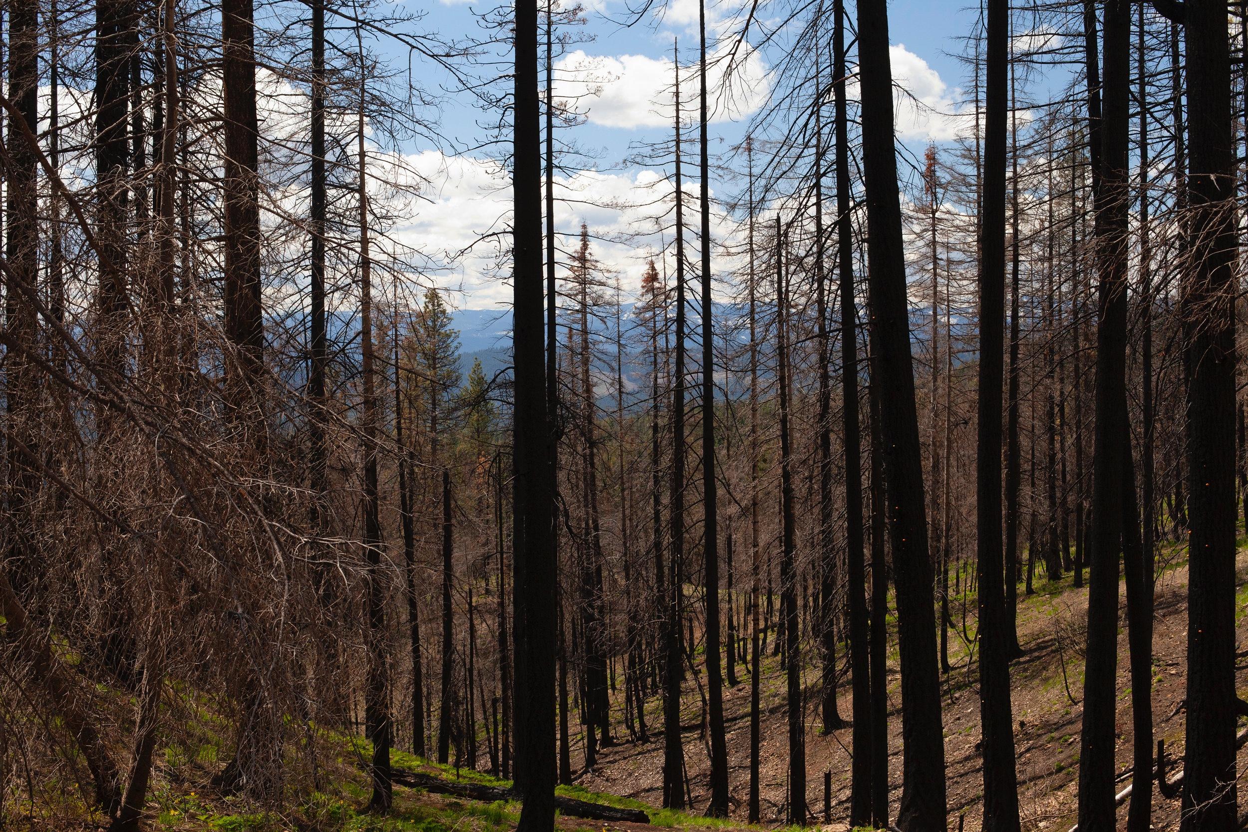 Teanaway Community Forest.  @casswalkerphoto