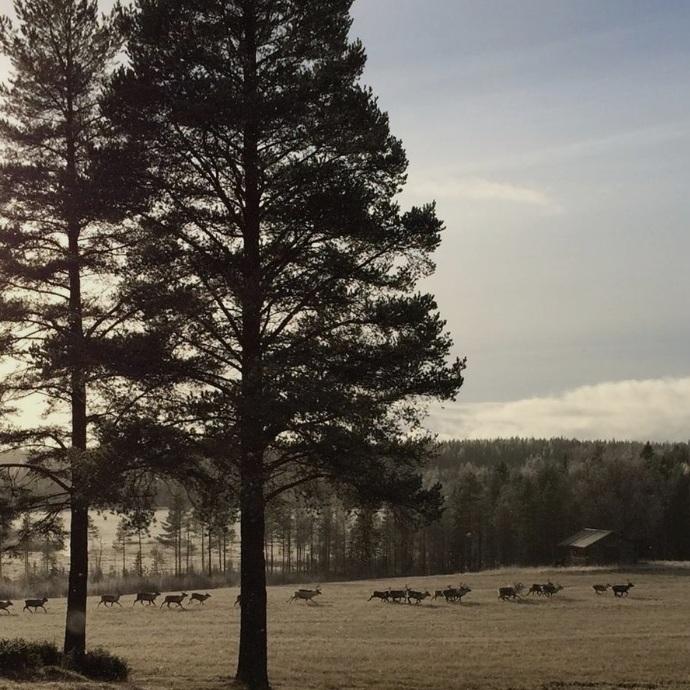 OMVÄG - TRÄSKLIDEN, SÖDER OM BURTRÄSKInte långt från Burträsk där den berömda Västerbottensosten, eller Burträskost som den också kallas, tillverkas kan man njuta av ett vackert landskap blandat med vatten, åkrar och skog. Har man tur kan man dessutom få se en renflock springa förbi.Tips inskickat av: Hampus Evers