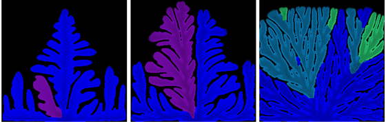 Simulation of the transition from regular dendrite to irregular dendrite (seaweed) in an undercooled B2 intermetallic-forming system. Undercooling increases from left to right  [4]
