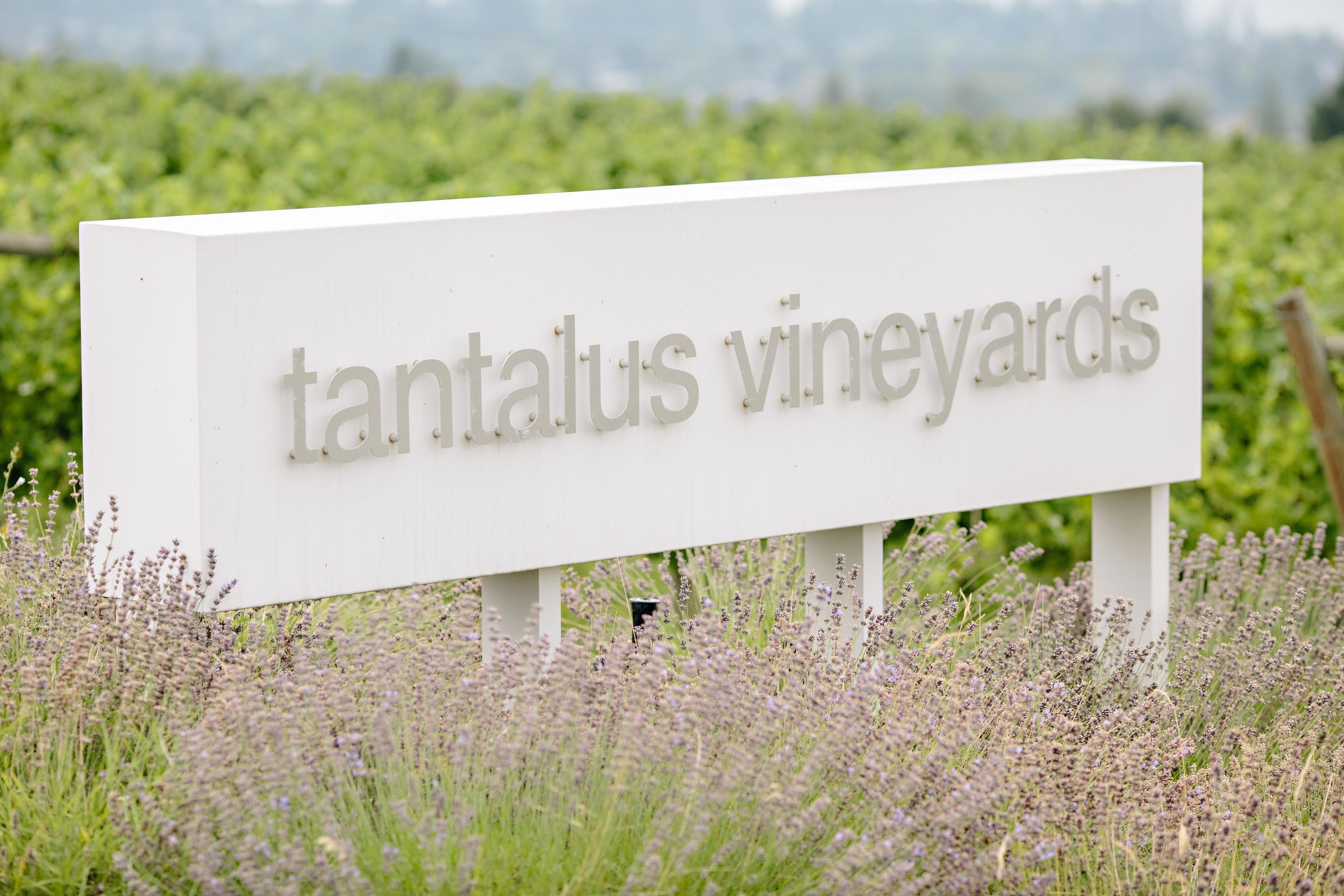 Tantalus Vineyards Kelowna Wedding.jpg