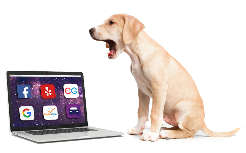 Reputation Management - We also understand that the internet is an unpredictable place - but have no fear! ClickHound can manage your reputation online, so you don't lose customers to bad reviews.