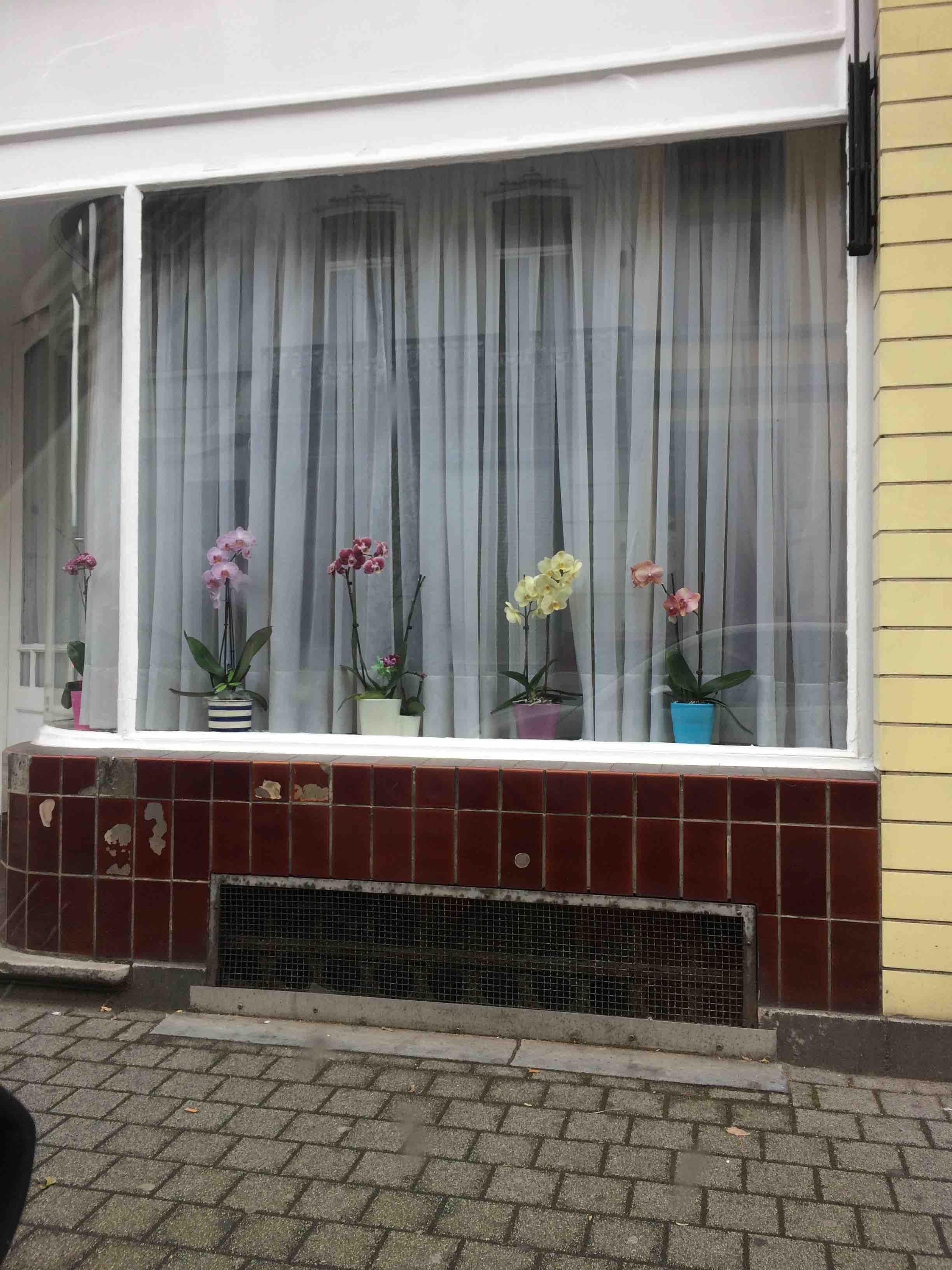 Belgium window orchid.jpg