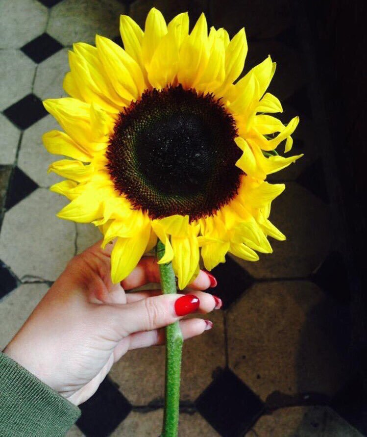"""I think I'd like to turn into a Sunflower most of all"""