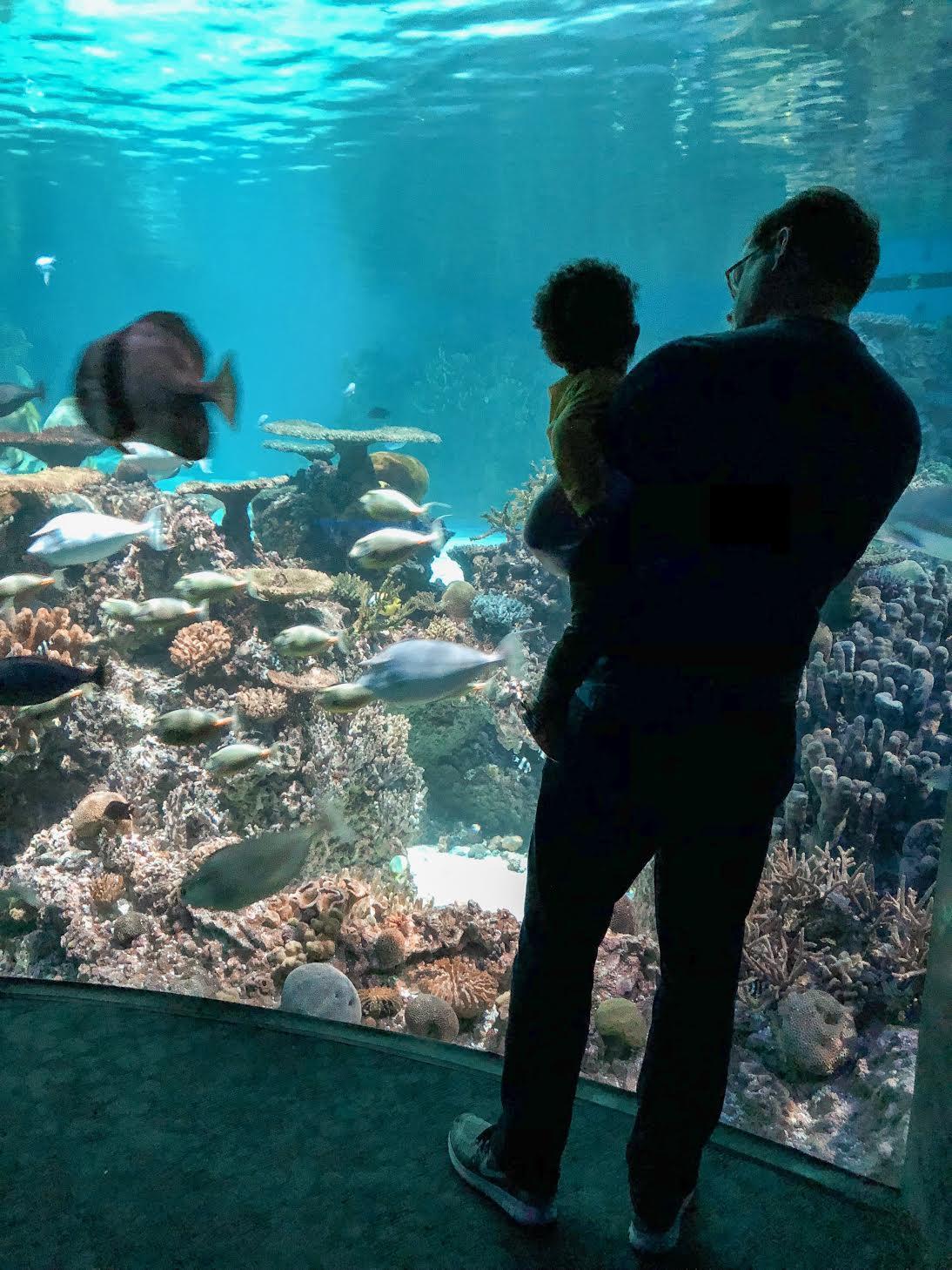 The National Aquarium - Baltimore, MD
