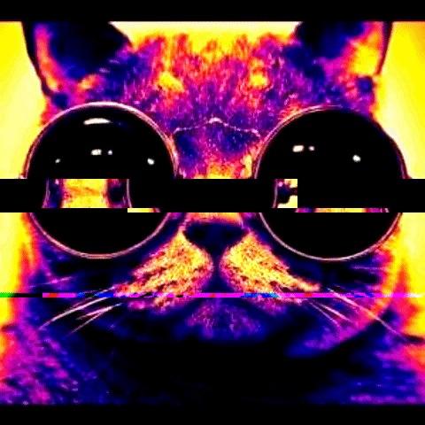 giphycat.jpg