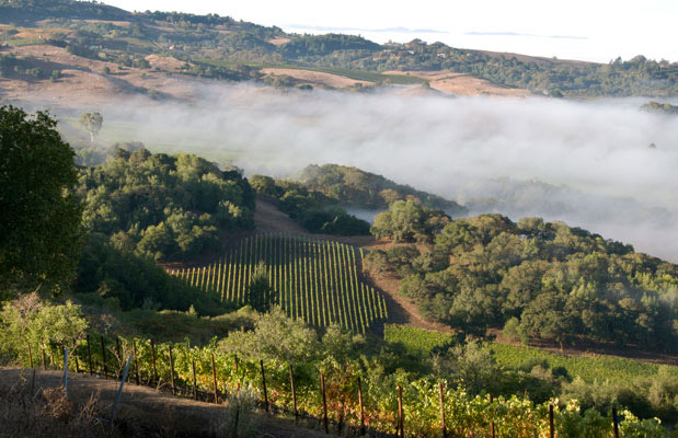 Fog rolling through Bennett Valley, Sonoma.