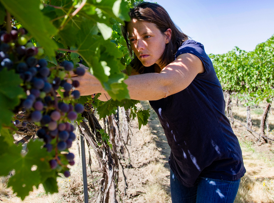 Winemaker Ashley Trout checking on her vines in Walla Walla, WA.
