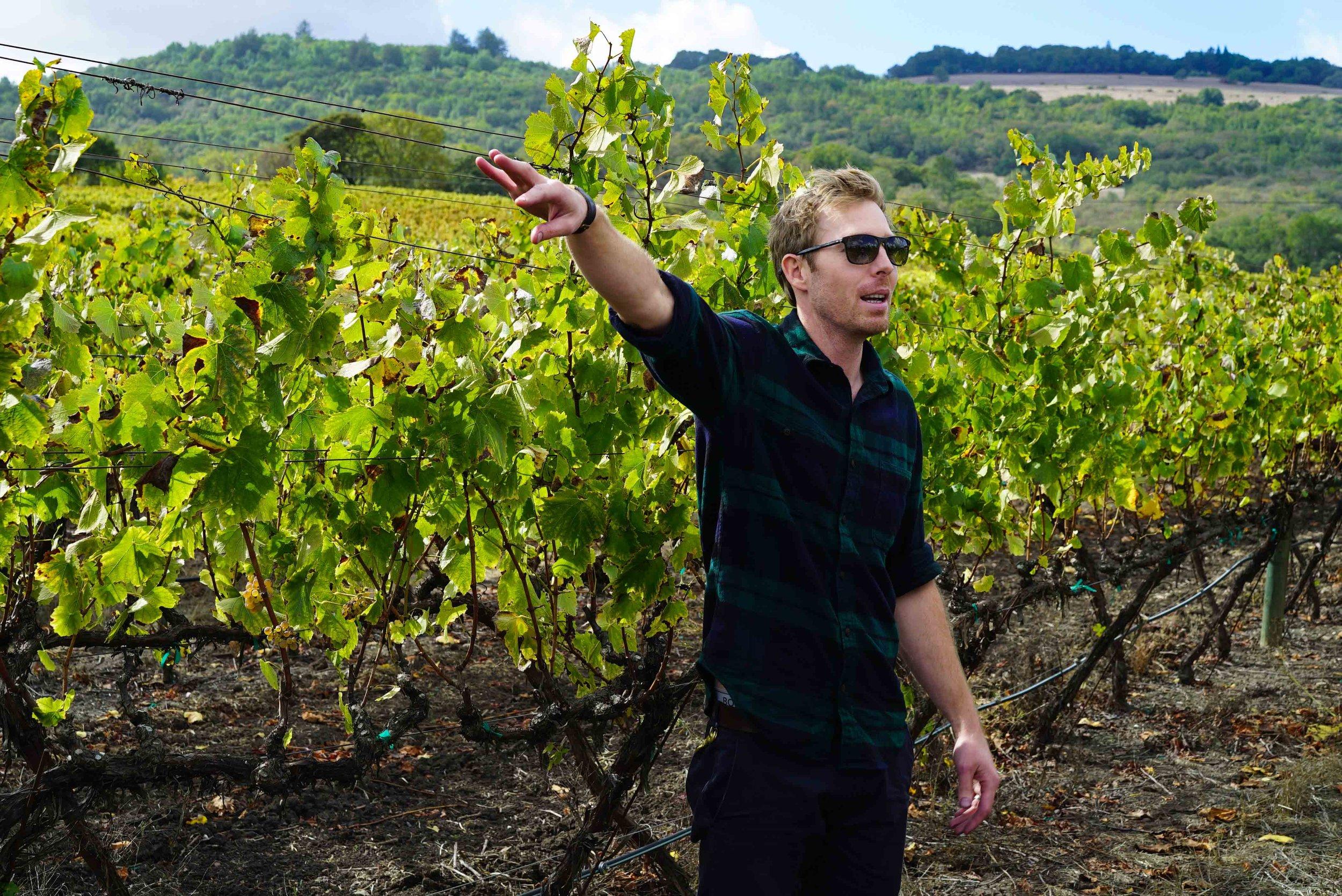 Blair giving a tour of the Farina Vineyard on Sonoma Mountain where his sources his Chardonnay.
