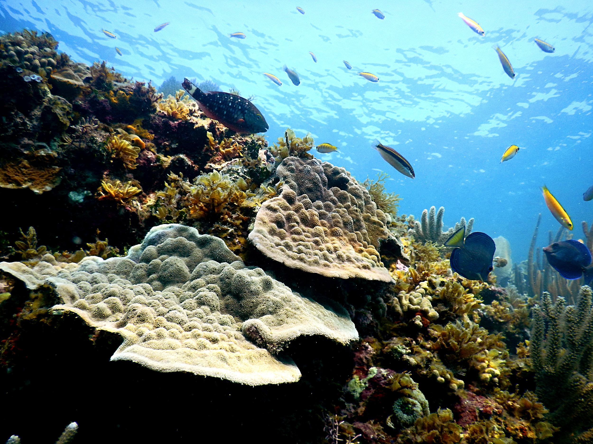Mustard coralscape.jpg