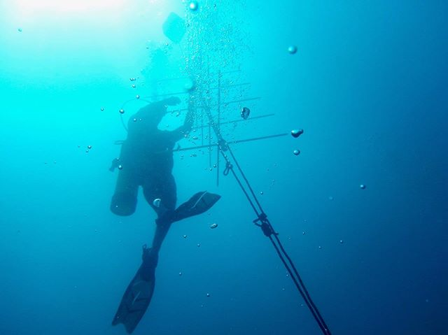 Where we'd rather be is under the sea! Here's our co-founder Stephan setting up a new tree frame for our baby coral fragments. . Can you guess how many frames we have in our nurseries? . . . . . #coralrestoration #savetheocean #savetheoceans #oceanconservation #oceanconservancy #coralbleaching #savethereef #savethecoral #reefrestoration #ourocean #oceanoptimism #nobluenogreen #protectouroceans #protecttheocean #acropora #marinebio #marinebiologist #hopespots #missionblue #coralconservation #scubadivingmag #diving_photography #underwater_world #underwaterlove #freedivingphotography #divingphotography #reefaddict #reefbuilders #reefgeek #coralnerd