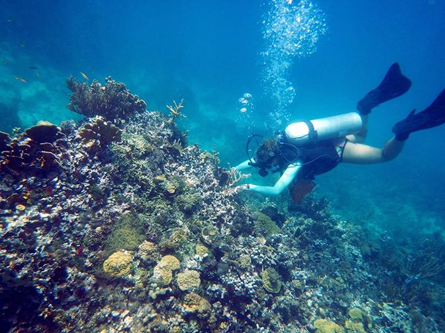 Here's our intern Courtney monitoring out-planted corals at one of the reefs off Amiga Island. . We monitor all of our out-plant sites to determine the health and growth of the corals placed there! . . . . . #coralrestoration #savetheocean #savetheoceans #oceanconservation #oceanconservancy #coralbleaching #savethereef #savethecoral #reefrestoration #ourocean #oceanoptimism #nobluenogreen #protectouroceans #protecttheocean #acropora #marinebio #marinebiologist #hopespots #missionblue #coralconservation #scubagirls #girlsthatscuba #girlsthatfreedive #scubadivinggirls #scubaaddict #scuba_diving #scubagram #scubadivergirls #scubadivingmagazine #scubalovers