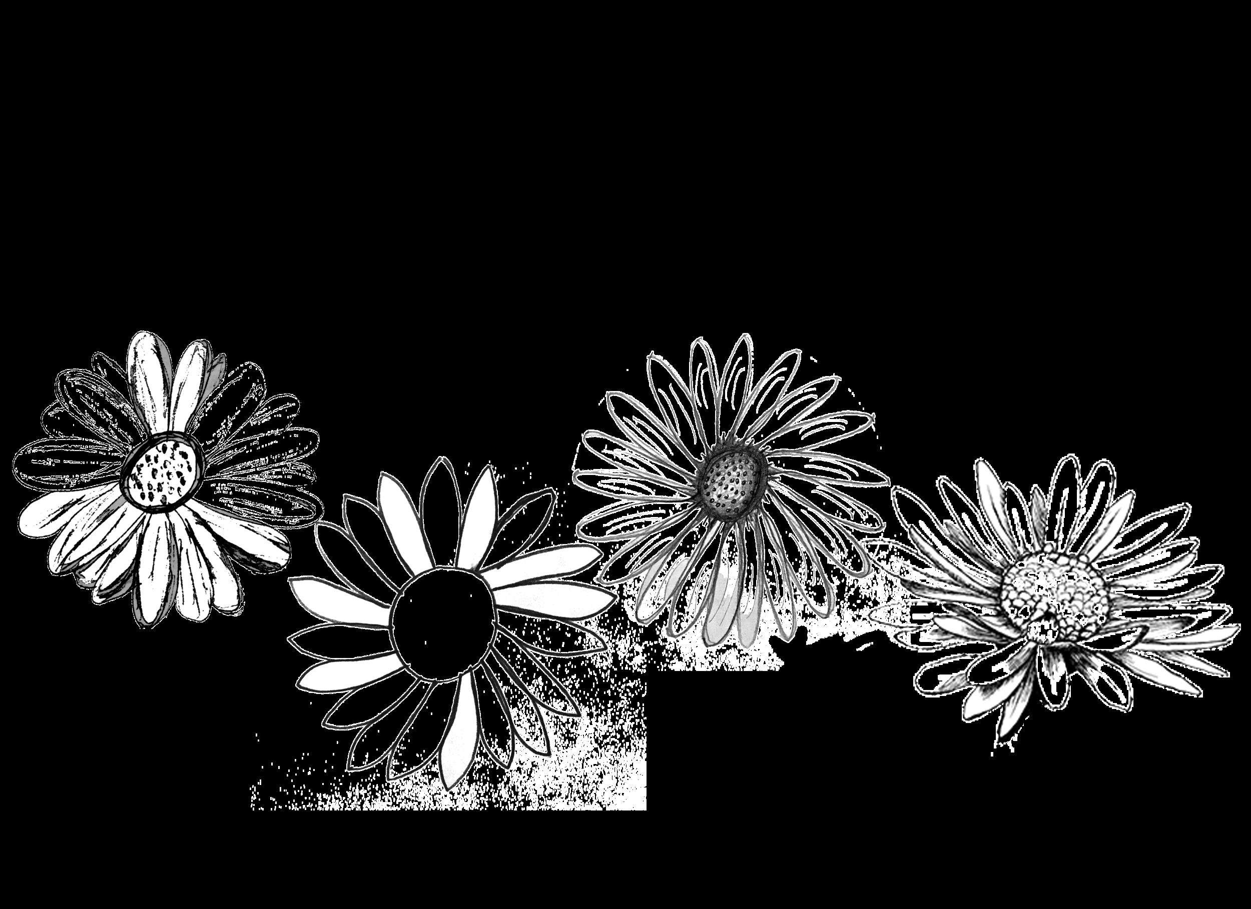 original daisies .png
