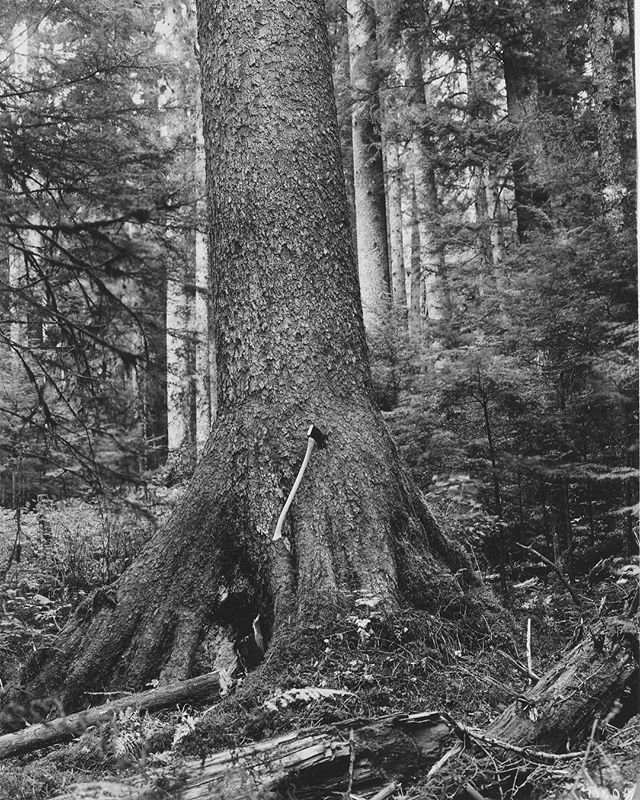 "It's the tail end of #nationalparkweek friends. Parks across the country are hosting a variety of special programs and events!  photo: forest service circa '53ish in Alaska...""a churn or swell butted spruce, diameter 6"" uber ax bit, alaska. photo number: 70502""  #findyourpark #npsfriends #forestservice @foresthistorysociety @u.s.forestservice @usinterior @llbean @nature_valley @subaru_usa @uprr @goparks @nationalparkservice"