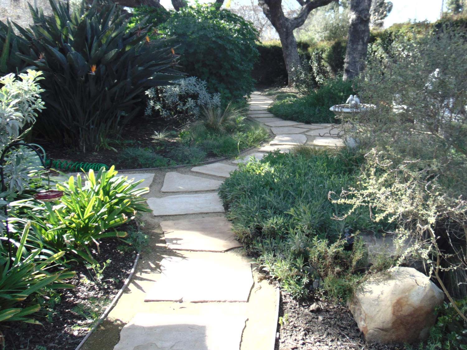 Patio and Yard Lanscape Design Consultations Bellevue WA by Jon L Shepodd Landscaping.JPG