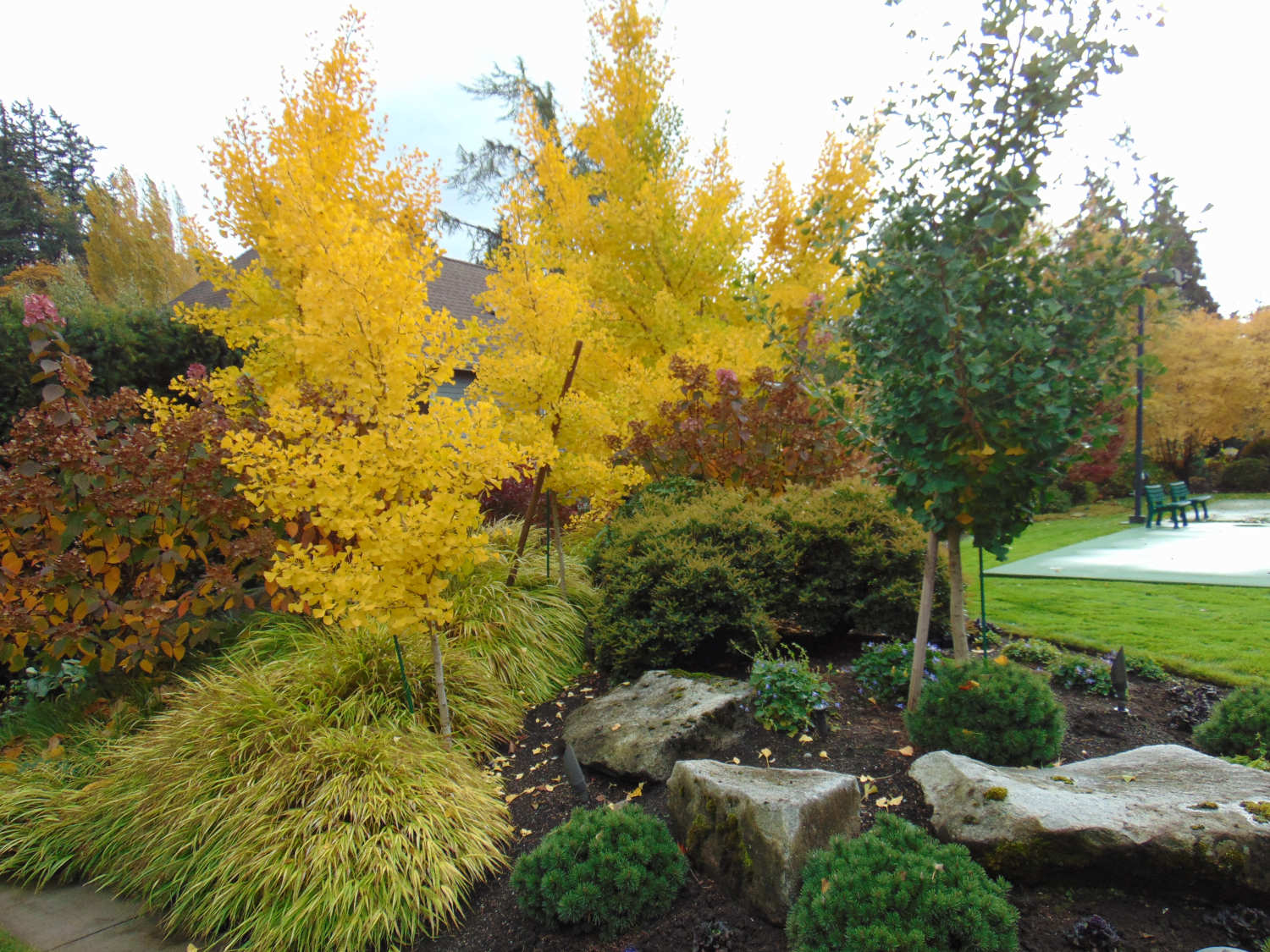 Lanscape Design Consultations and Installations in Bellevue WA by Jon L Shepodd Landscaping.JPG