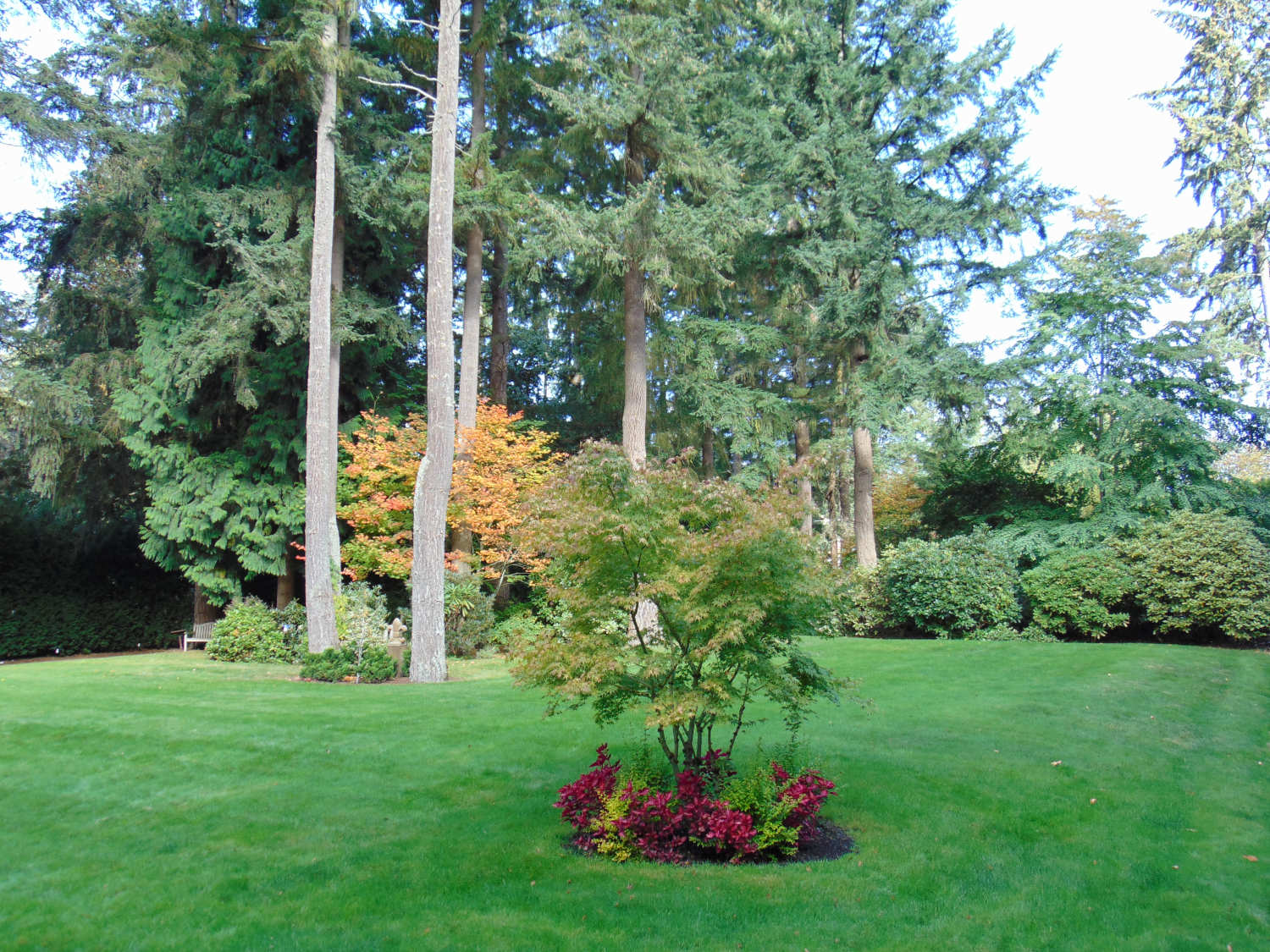 King County Lanscape Design and Consultations by Jon L Shepodd Landscaping.JPG