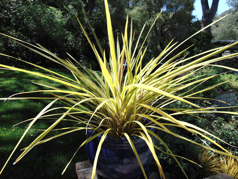 Plants by Jon L Shepodd Landscaping.JPG