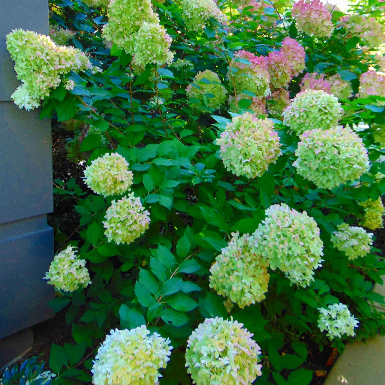 Plant+Lanscape+Design+Bellevue+WA+by+Jon+L+Shepodd+Landscaping.jpg