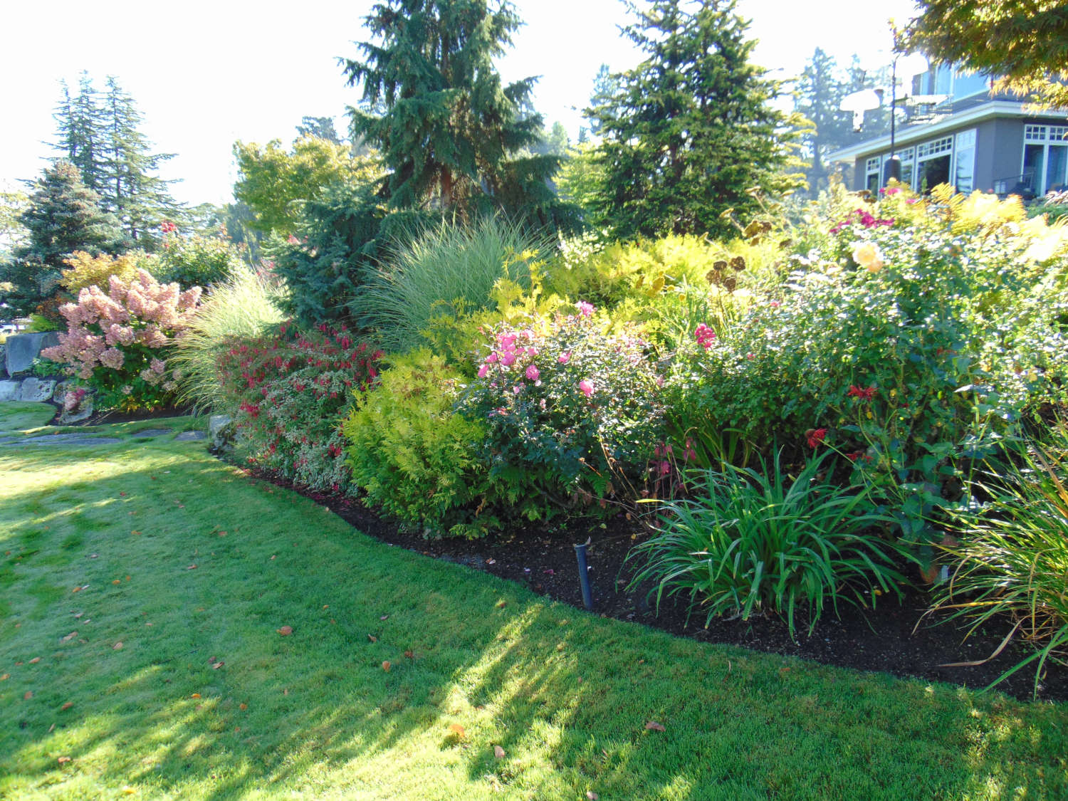 Bellevue WA Lanscape Consultations and Design by Jon L Shepodd Landscaping.JPG