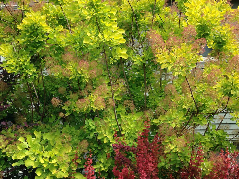 Lanscape Consultations Redmond WA by Jon L Shepodd Landscaping.jpg