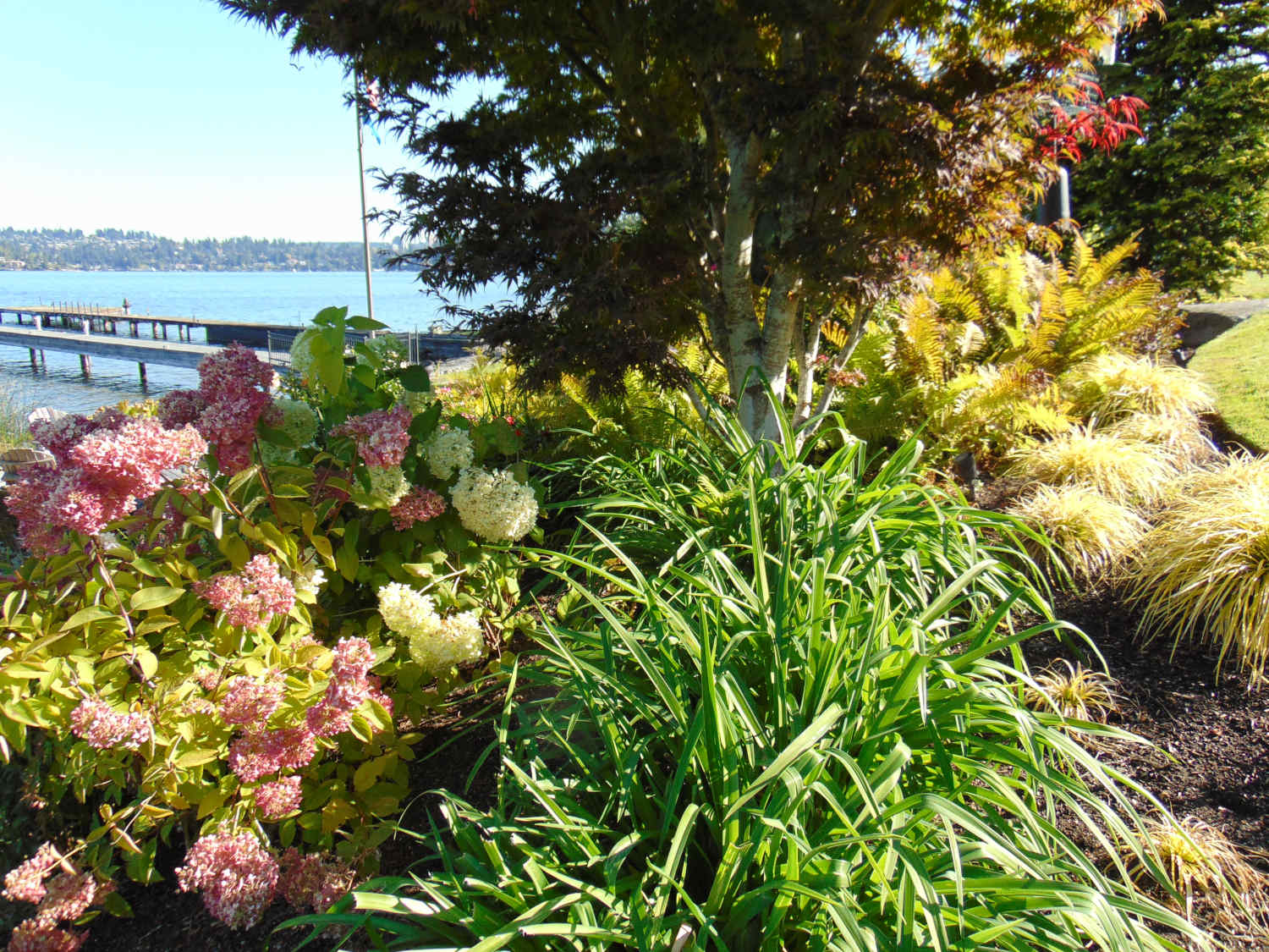 Redmond WA Landscape Design and Consultations by Jon L Shepodd Landscaping.JPG