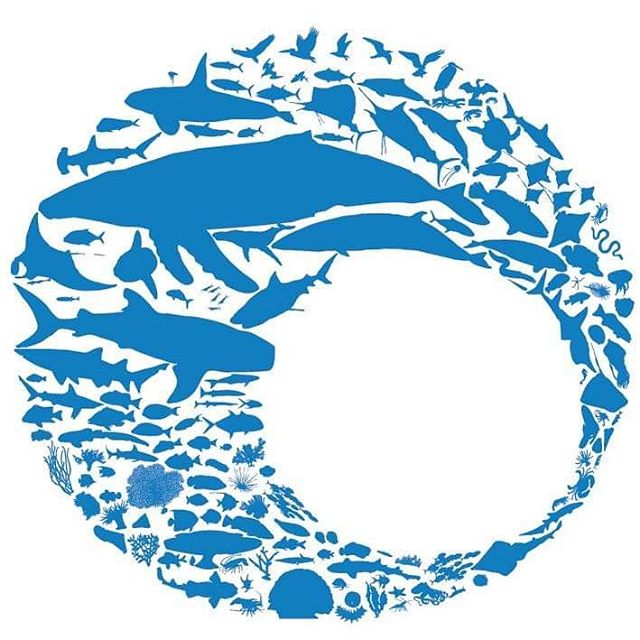 Welcome to Oceanwise Australia! We progress research, management and conservation of the planet's most endangered ecosystems and species. Follow us to find out more about our exciting projects! ⠀⠀⠀⠀⠀⠀⠀⠀⠀ 🌊 ⠀⠀⠀⠀⠀⠀⠀⠀⠀⠀⠀⠀⠀⠀⠀⠀⠀⠀⠀⠀⠀⠀⠀⠀⠀⠀⠀⠀⠀⠀⠀⠀⠀⠀⠀⠀ #oceanwise #oceanwiseaustralia #marineresearch #marineconservation #marinescience