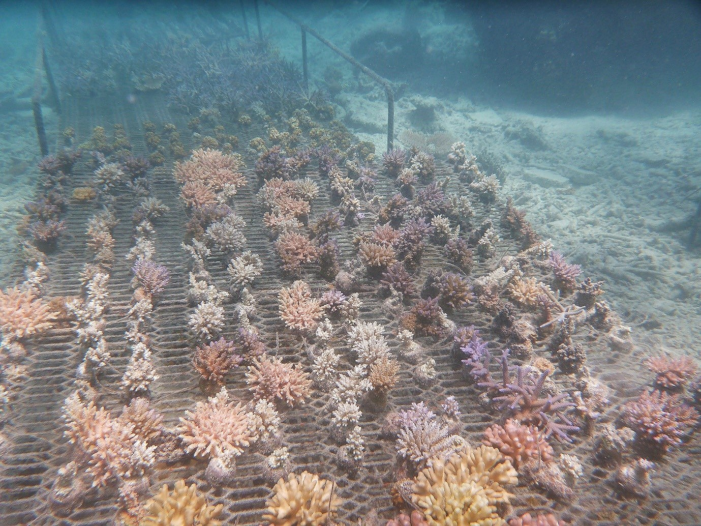 Figure 1. Corals growing on ocean racks.