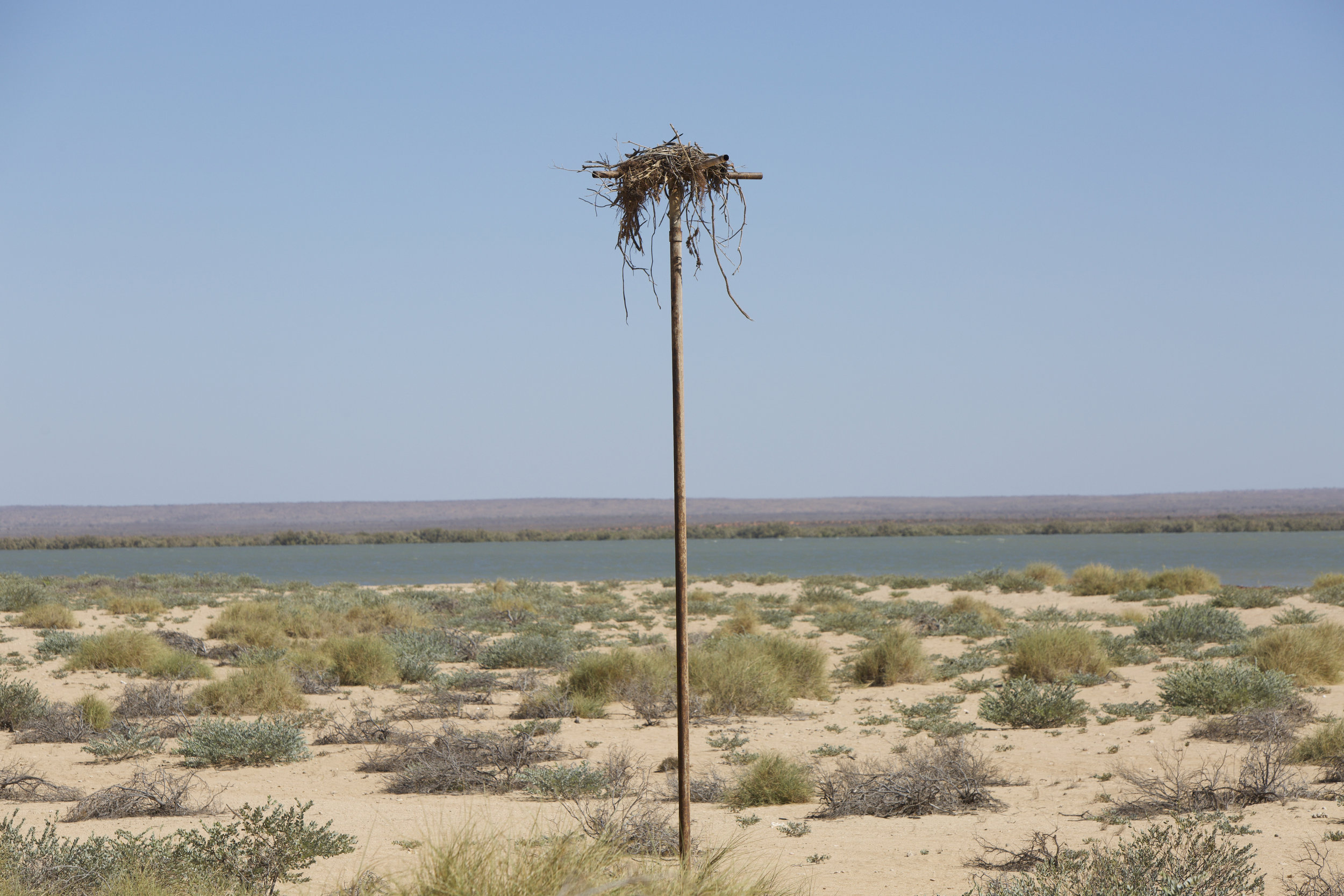An Osprey ( Pandion haliaetus ) nests in the Bay of Rest, Exmouth Gulf.