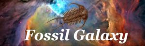 Fossil Galaxy 2208 Postoffice | 409.256.6985 fossilgalaxy.com