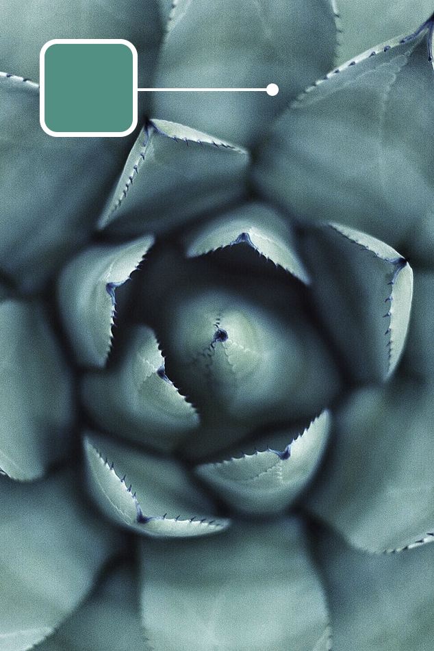 508_agave_Colors.jpg