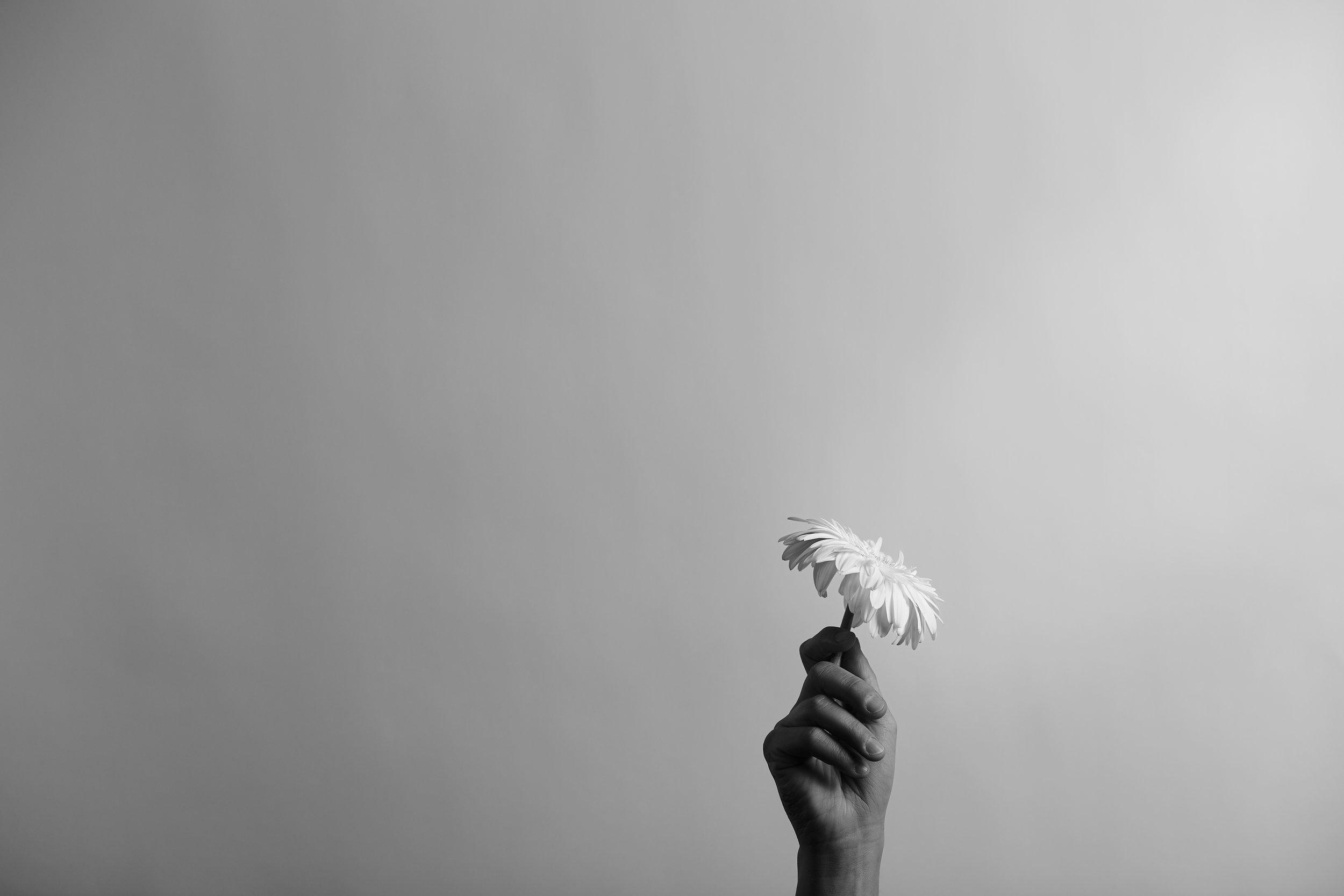 danielle-saler-photography-growth-0877-1.jpg
