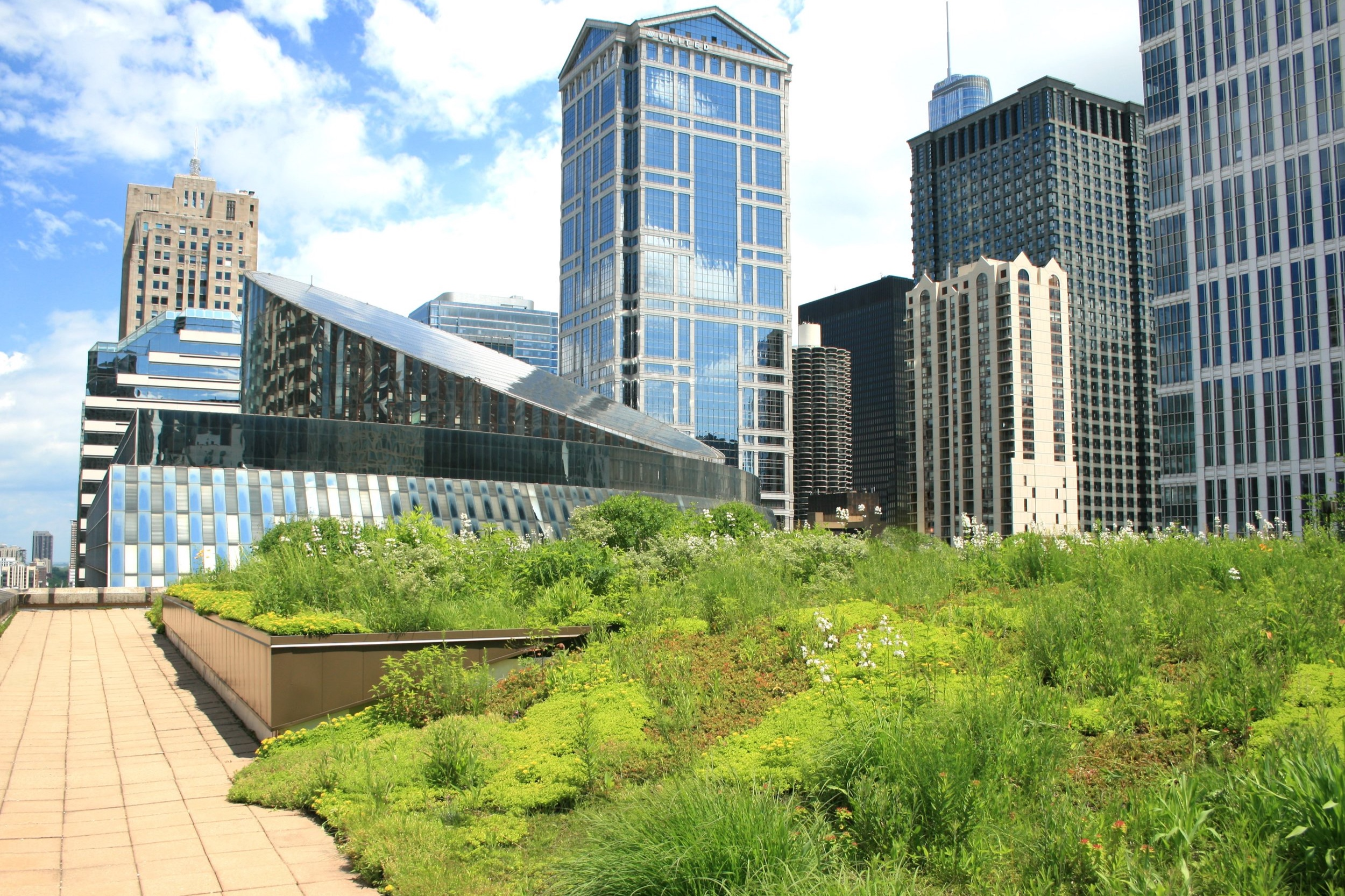 City Hall Green Roof -