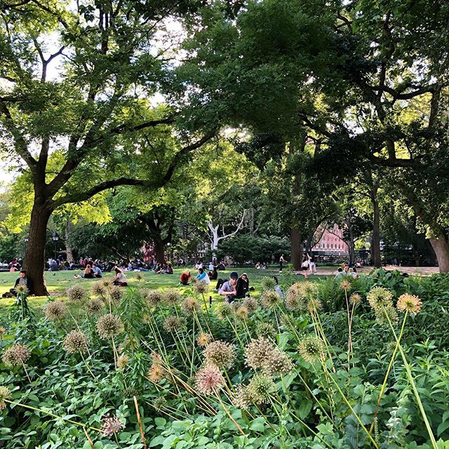 #newyorkcity always brings it all together, the trees, the people, the flowers, the power, the work, the love, the creative energy, the magics ✨💕 I am so grateful to be part of this incredible #city and #community 🙏 #ilovenewyork