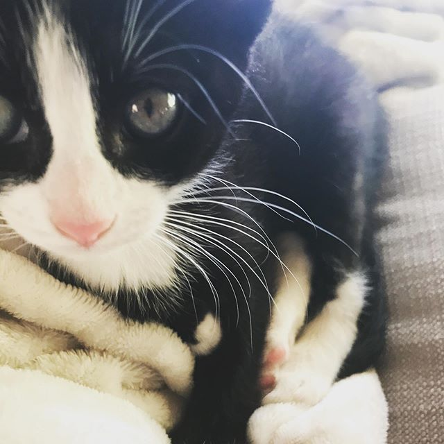 i got a kitten and her name is Lola and i love her very much!!!!