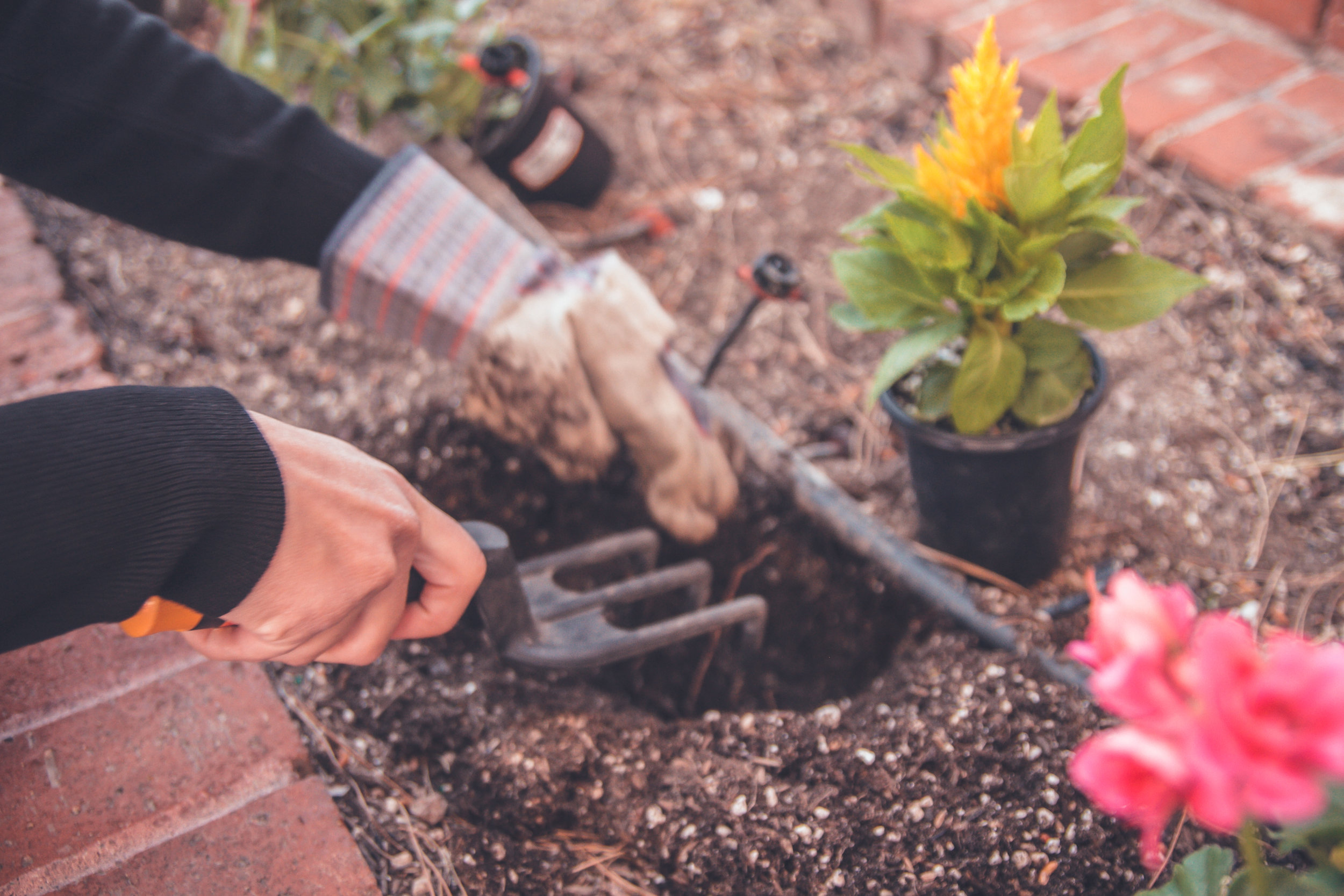 Ask an expert - Get pro tips from a master gardener on how to create a thriving Colorado garden.