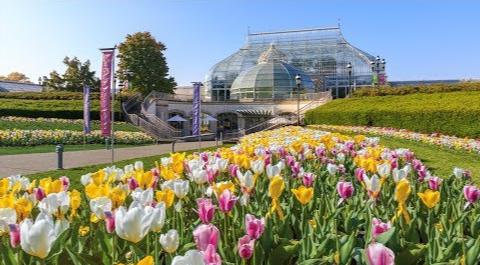 Spring Tulips - Denver Botanic Garden