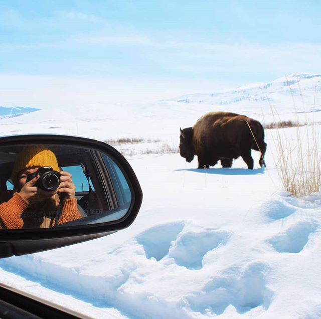 That time we had the bison range to ourselves and this one decided to come charging by our car 🐂 We were worried our vehicle wouldn't make it on the uncleared roads through the park but it turned out fine. A few more weeks when things get wet and muddy it probably wouldn't have been the case. Yay for good timing!! ➡️If you're ever in Montana, the National Bison Refuge is well worth the visit. . . . . . . . . . . . . . #montana #bigskycountry #nationalbisonrange #glaciernationalpark #findyourpark #rockymountains #rockymountainnationalpark #roamtheplanet #neverstopexploring #livetoexplore #welivetoexplore #wanderfolk #girlswhoadventure #girlsthatexplore #girlswhoadventure #dametravel #sheisnotlost #stayandwander #staywild #girlslovetravel #roadtripamerica #roadtripusa #visittheusa #homeiswhereyouparkit #vanlifeexplorers #vanlifeamerica #americafromtheroad #travelmontana