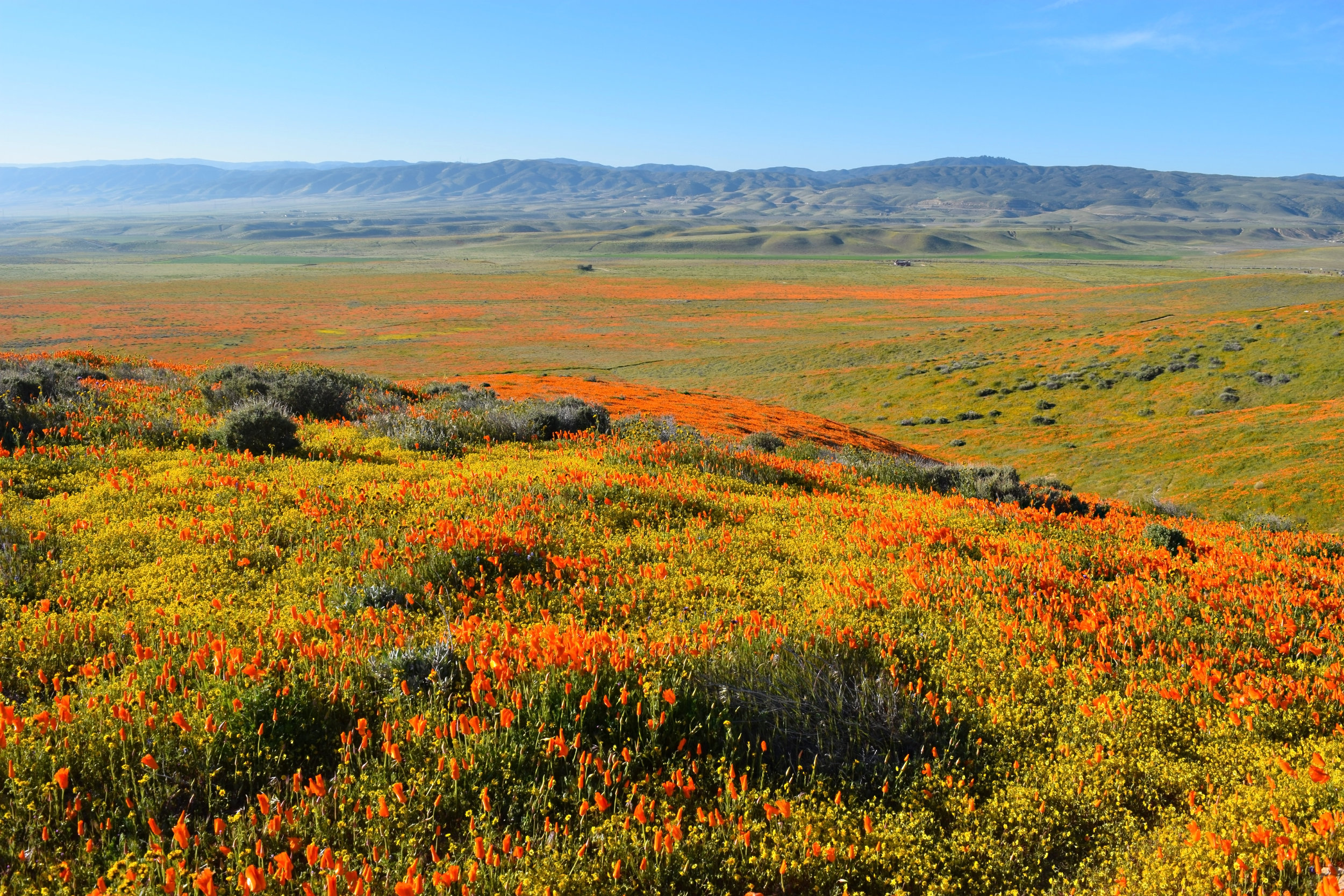 Best places to see spring bloom on the west coast