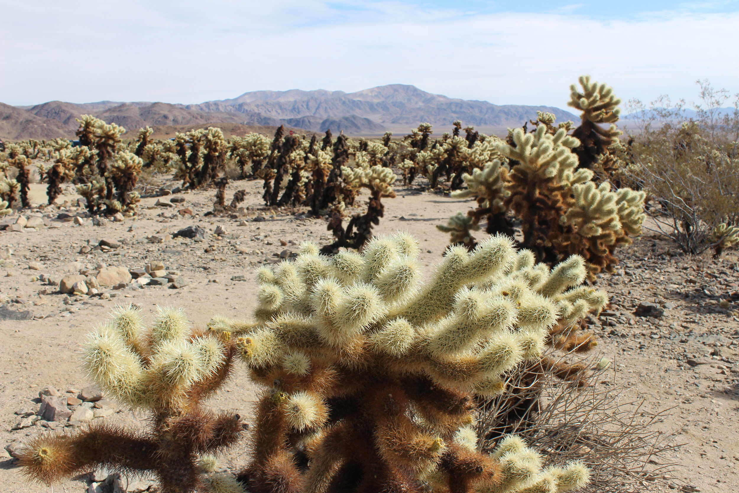 Joshua Tree National Park Highlights