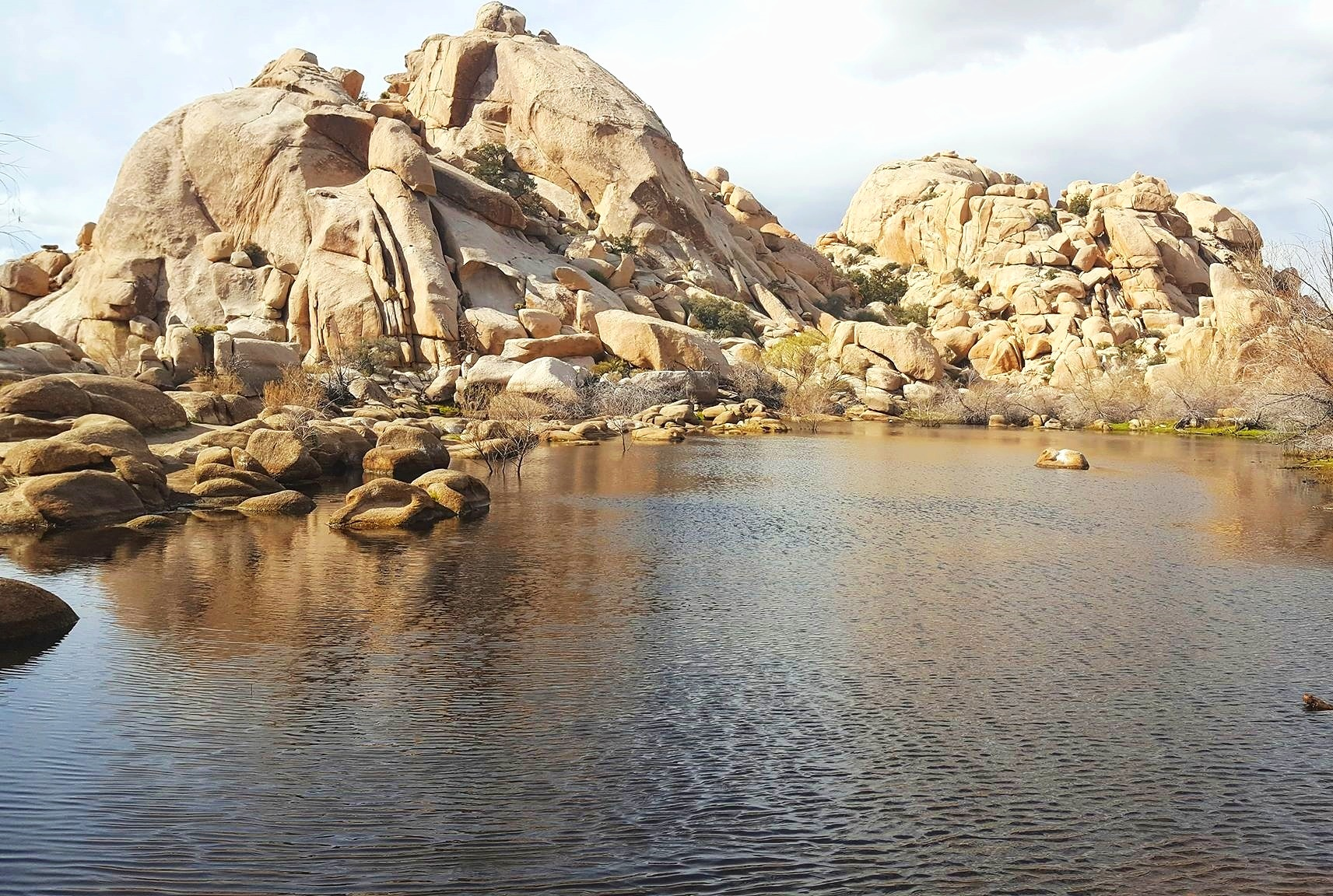 One Day Road Trip in Joshua Tree National Park