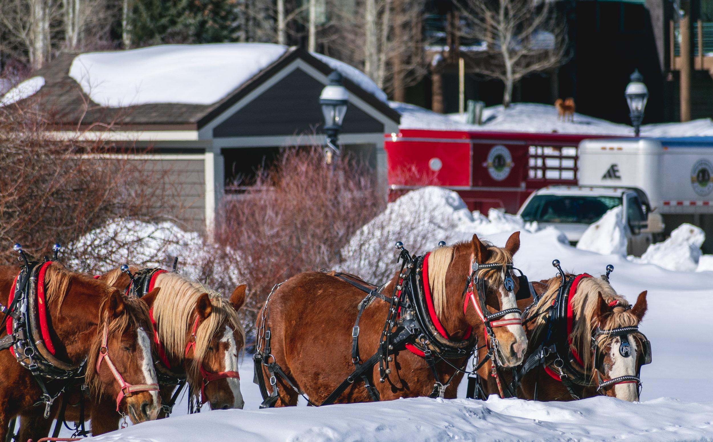 Take a winter sleigh ride