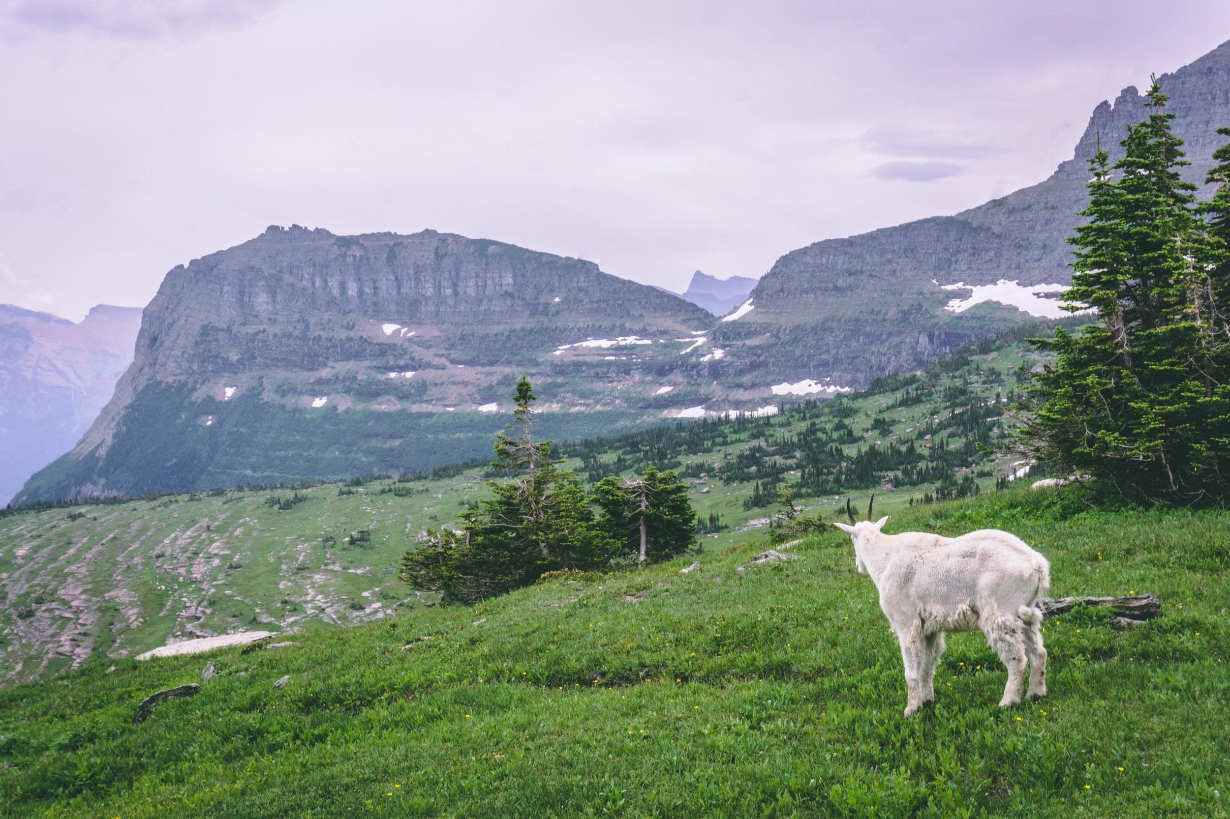 Montana Travel Guide