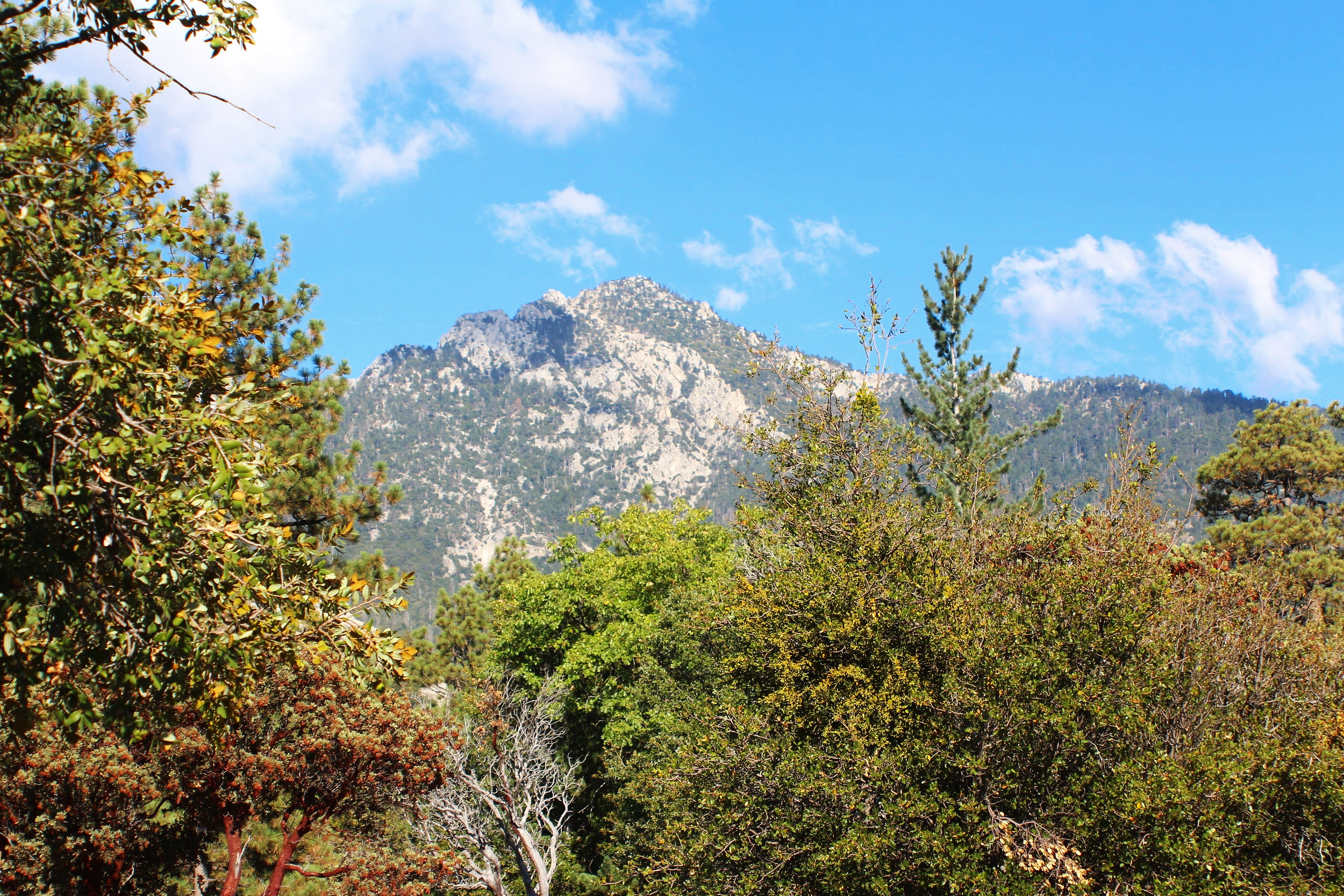 2 Days in Idyllwild, California
