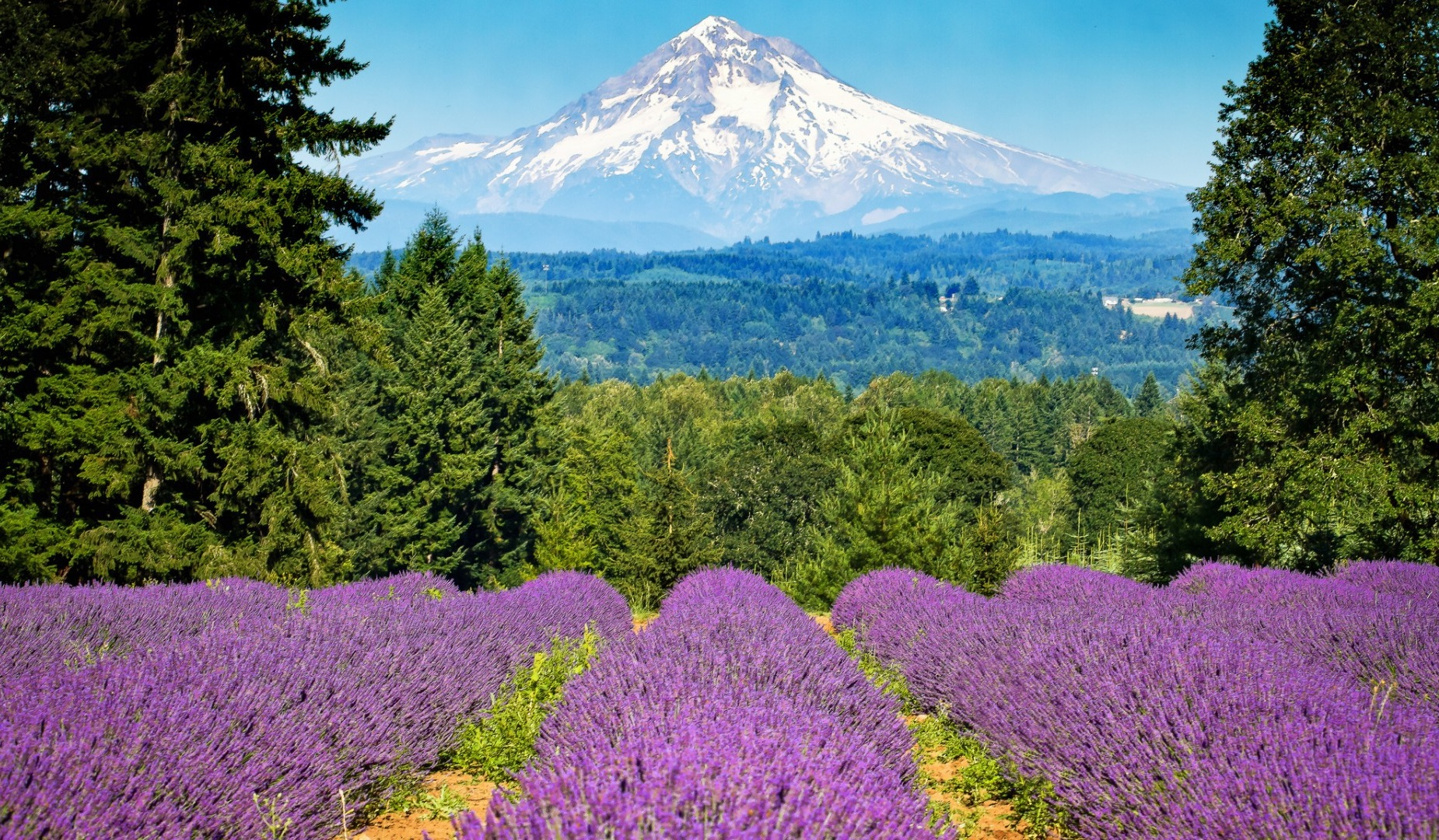 Best+places+to+see+spring+bloom+in+USA