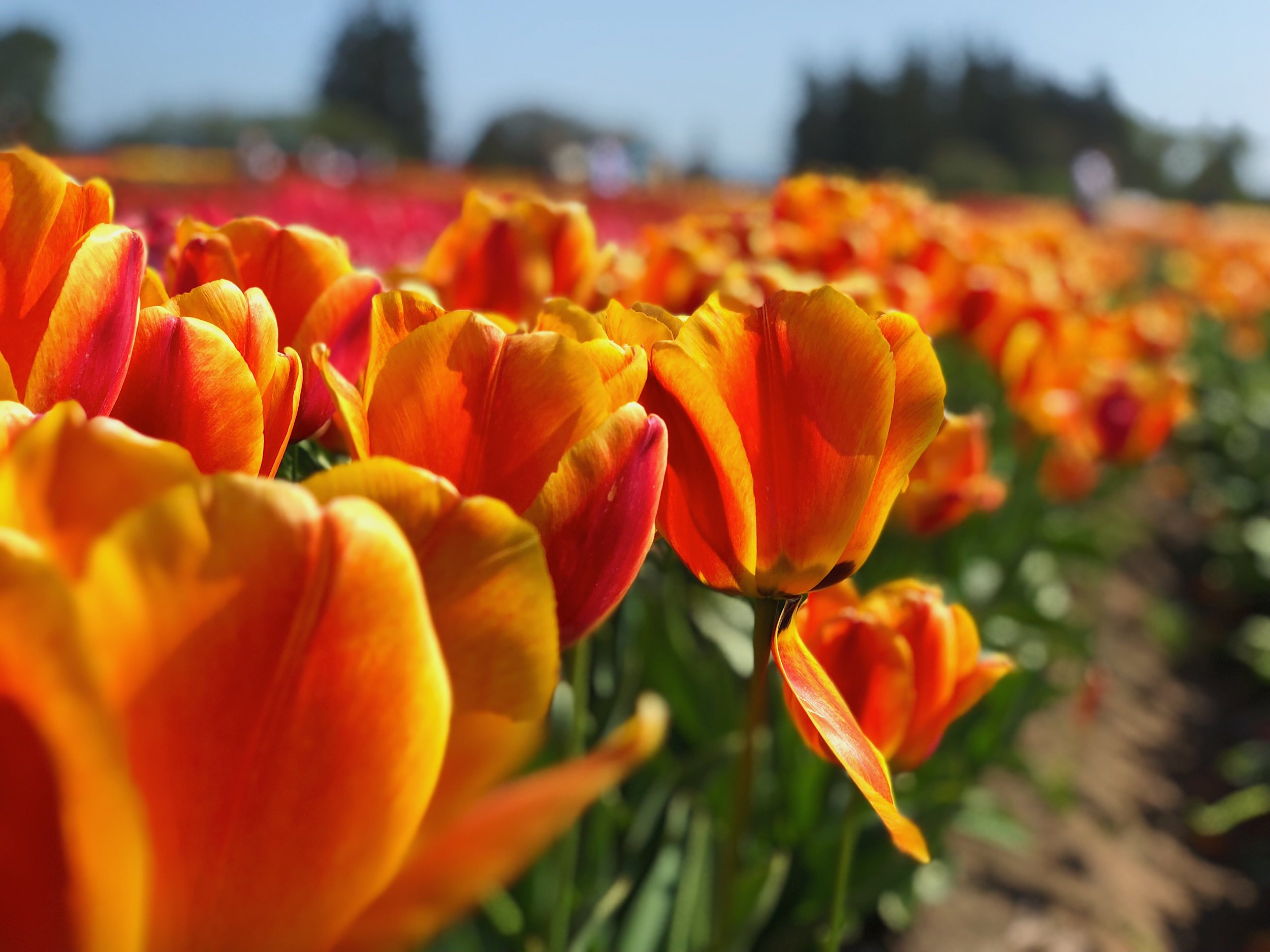 Oregon Bucket List - Top Things To Do in Oregon