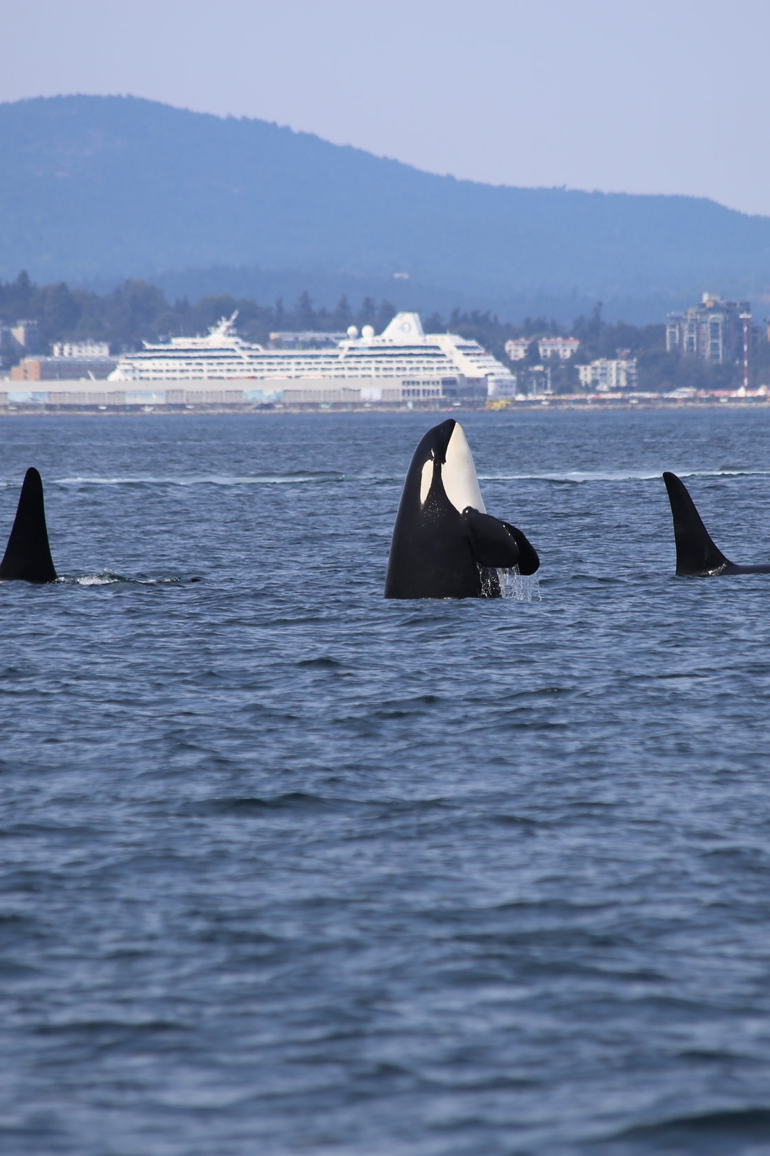 - TAKE A WHALE WATCHING CRUISE