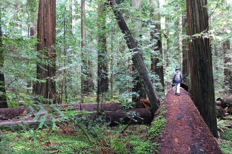 Northern California Road Trip - Redwoods and Avenue of the Giants