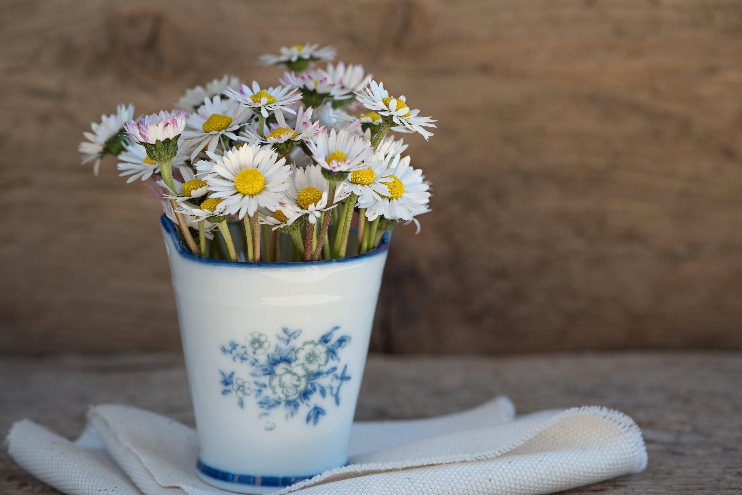 bloom-blossom-daisies-99565.jpg